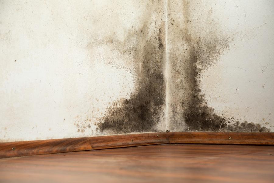 Плесень на стене в квартире: как избавиться, чем вывести плесень