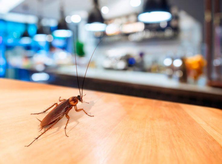 Как морить тараканов борной кислотой и яйцом