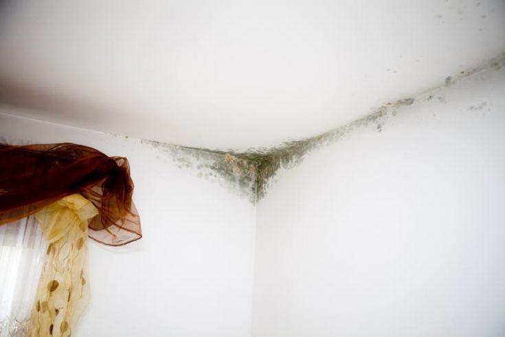 Плесень на стене в квартире