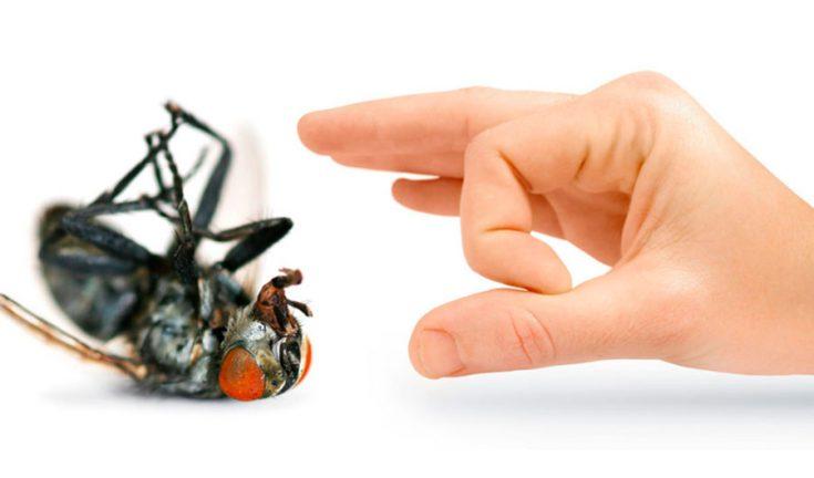 Борьба с мухами народными методами