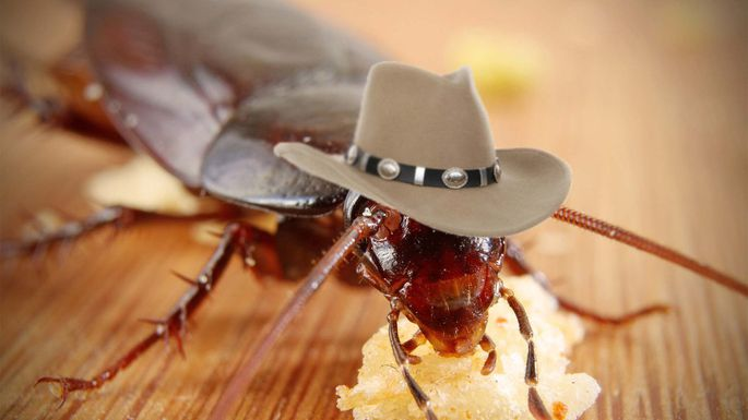 Характер поведения тараканов