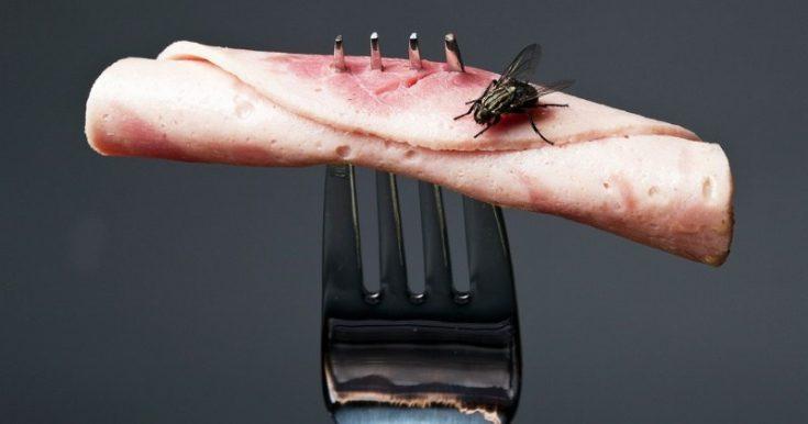 Причины появления мух в доме