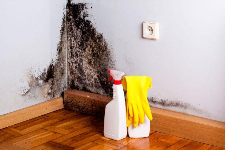 Эффективные способы борьбы с плесенью на стенах