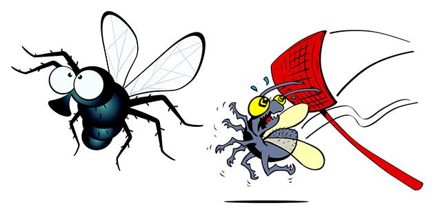 Профилактические мероприятия от мух