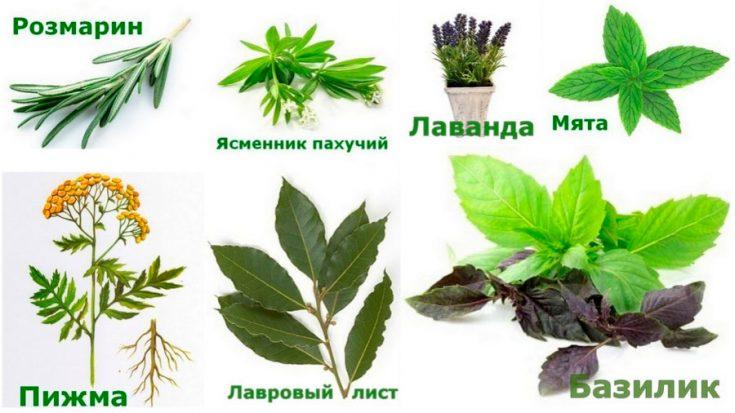 Растения от мух в доме