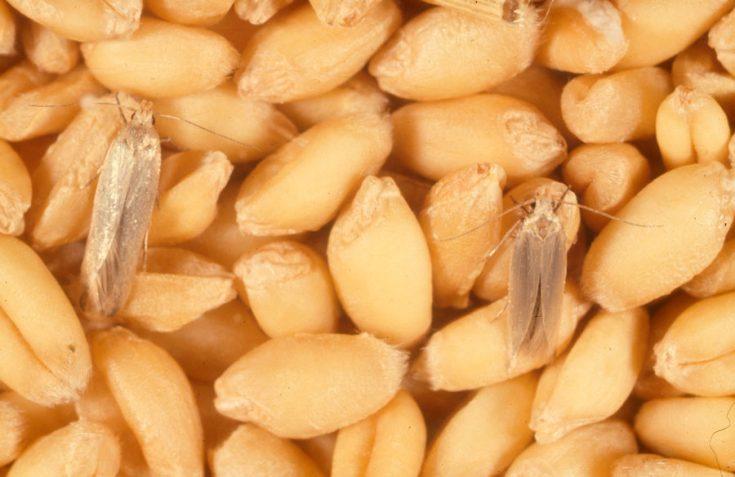 Методы борьбы с пищевой молью