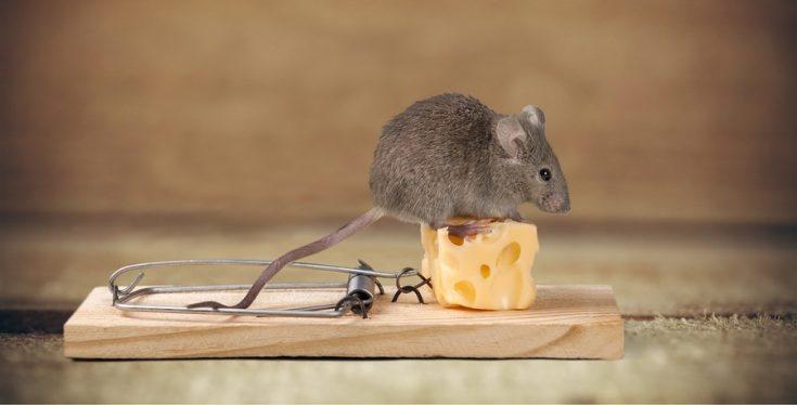 Эффективные методы борьбы с мышами