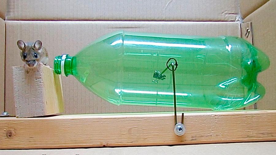 Ловушка для мышей своими руками: мышеловка из пластиковой 10