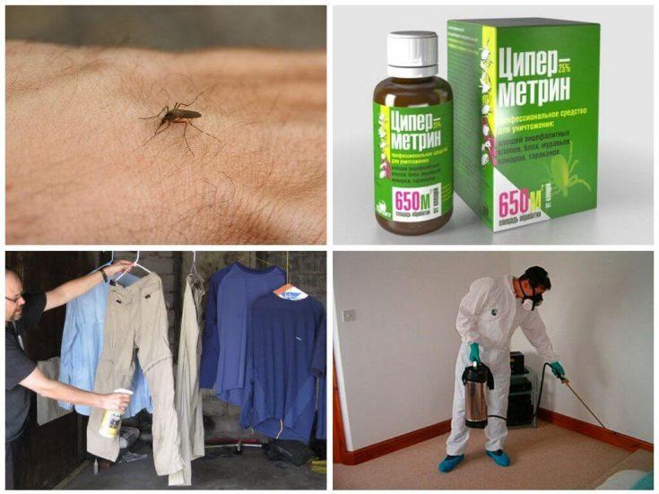 Как обрабатывать помещение от насекомых