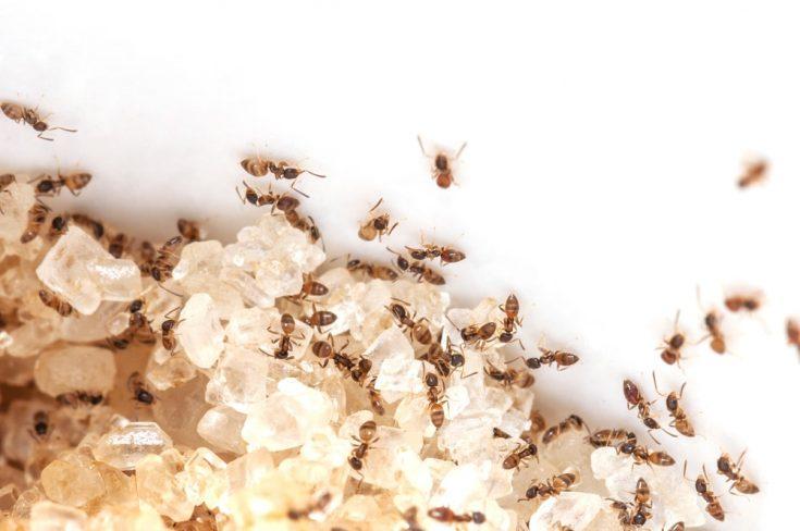 Сложность борьбы с колонией муравьев