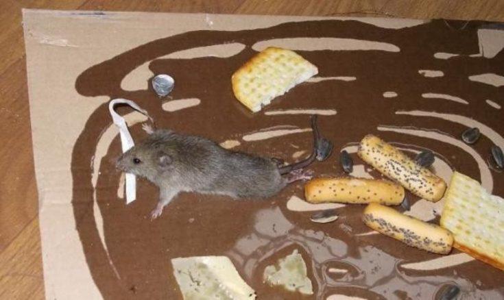 Клей против мышей