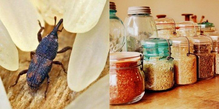 Эффективные методы борьбы с жуками в крупах