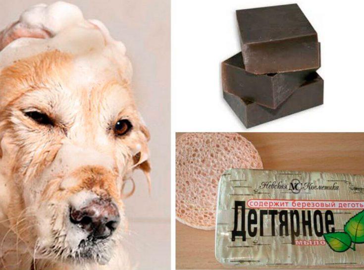 Дегтярное мыло от блох у собаки