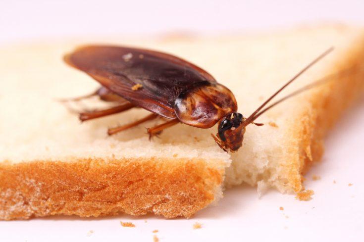 Причины появления тараканов в квартире