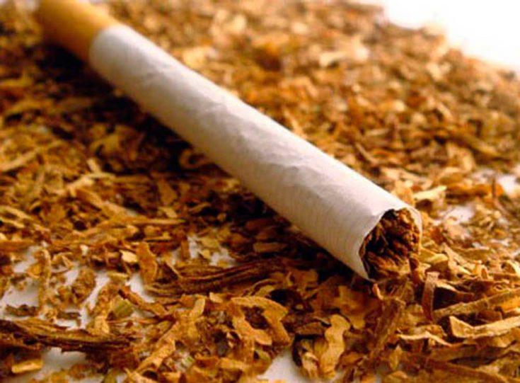 Табак в борьбе с молью