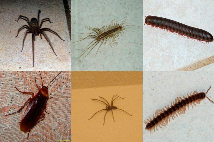 Какие насекомые могут завестись в квартире