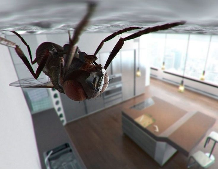 Причины появления мух в квартире