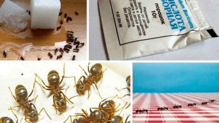 Эффективное средства от муравьев в квартире