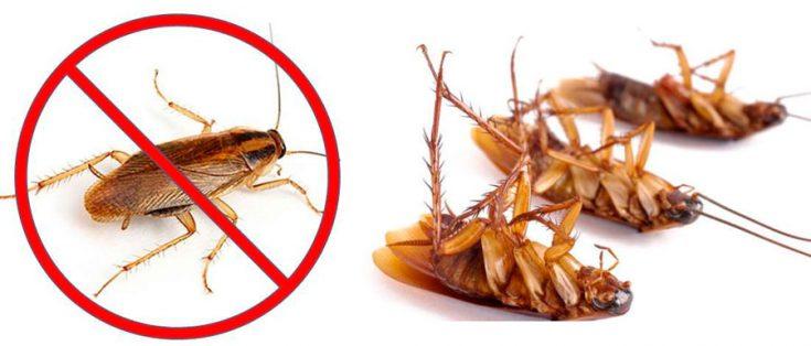 Как вывести рыжих тараканов