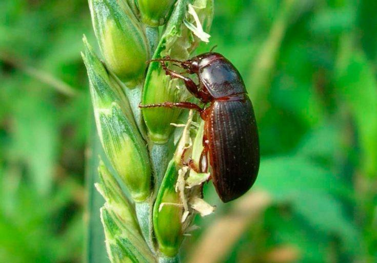 Вред насекомого для человека и растений