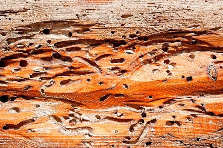 Советы по эксплуатации древесных конструкций