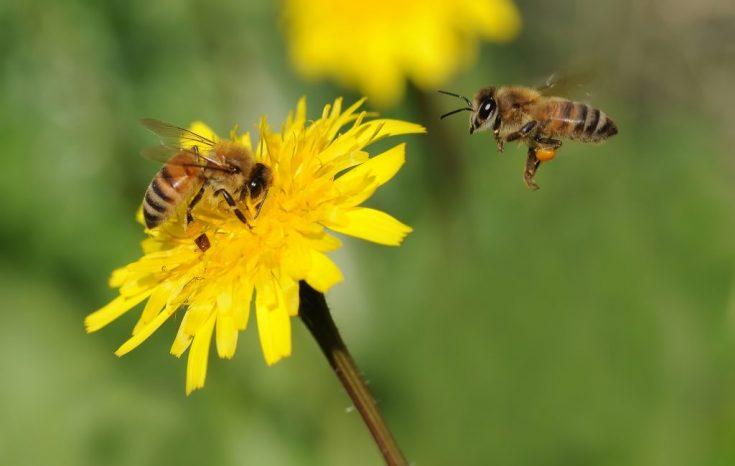 Польза и вред от пчел и ос