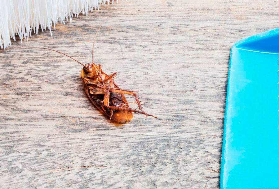 Самое действенное средство от тараканов