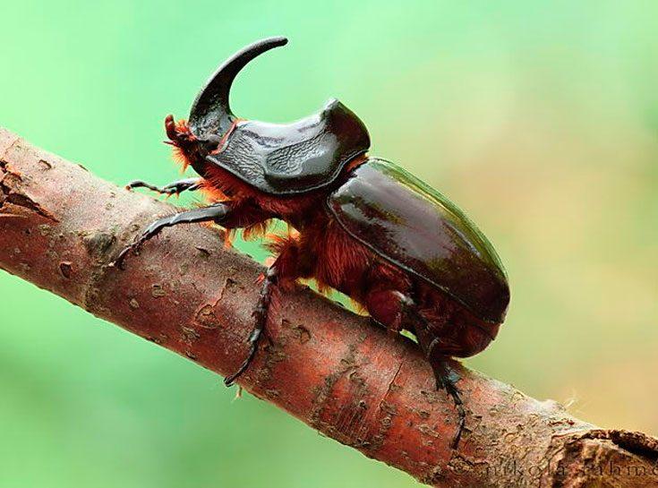 Естественные враги жуков