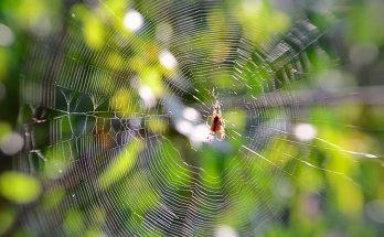 Паук – это насекомое или животное