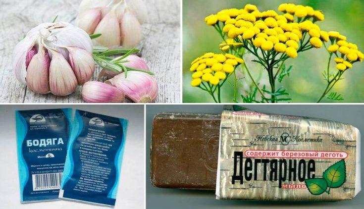 Народные средства борьбы с демодекозом