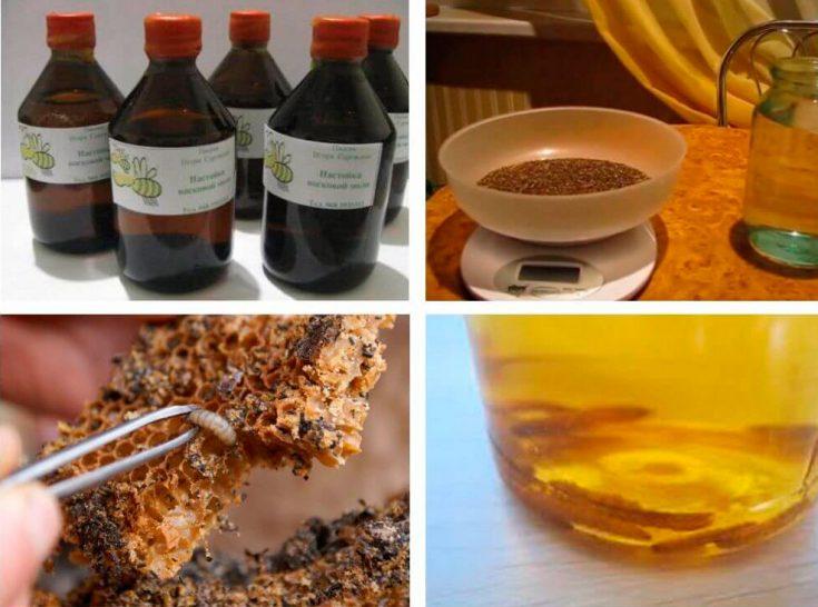 Секреты приготовления настойки личинок восковой моли