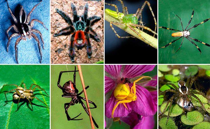 Виды и подвиды