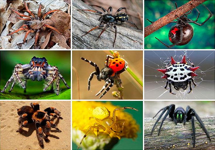 Как выглядят самые опасные и ядовитые пауки