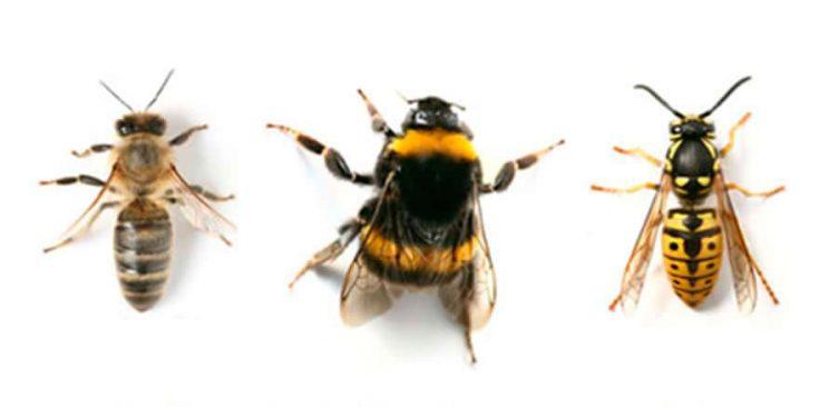 Различия этих насекомых