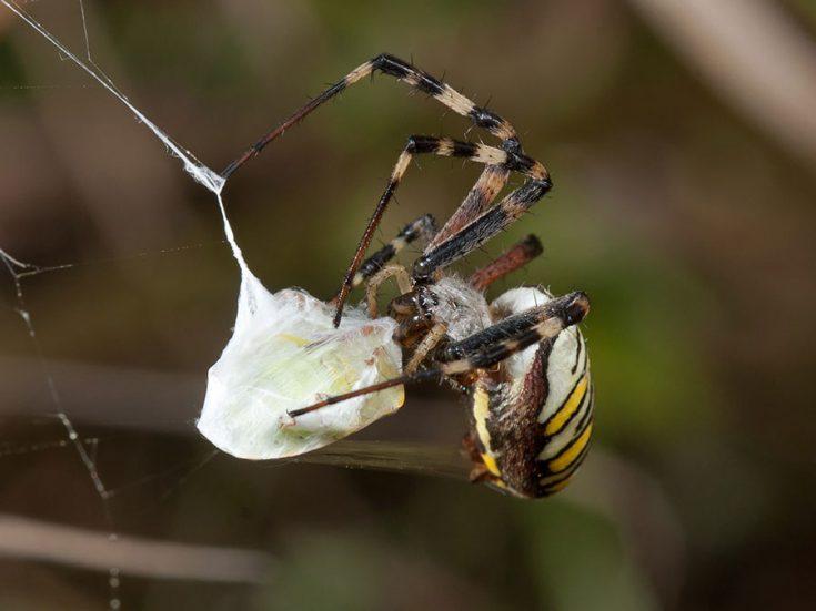 Как питаются пауки