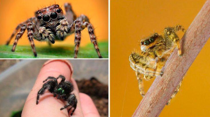 Какие бывают пауки