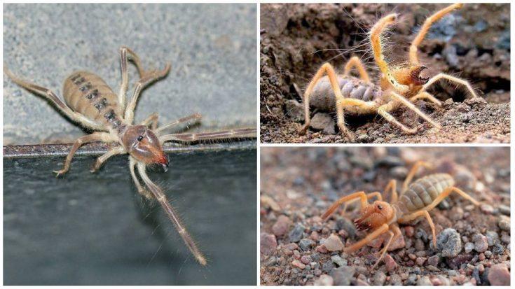 Другие паукообразные