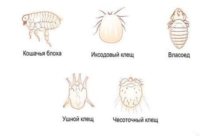 Разновидности клещей и их описание