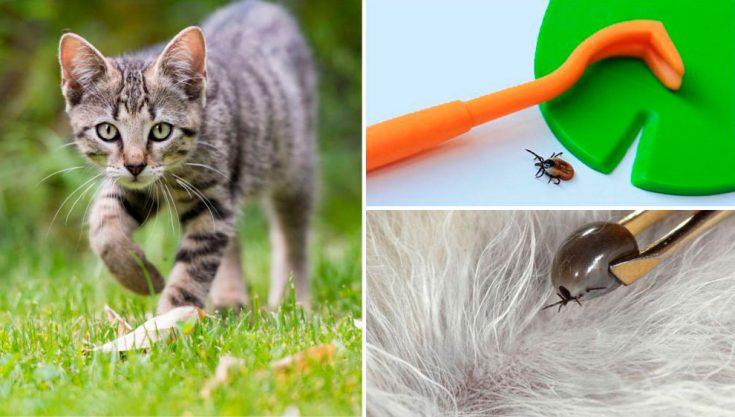 Как избавиться от клещей у животного