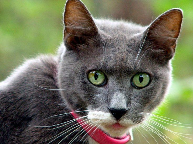 Лучшие ошейники от блох и клещей для кошек