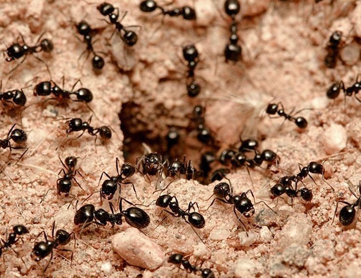 Природные места обитания муравьев