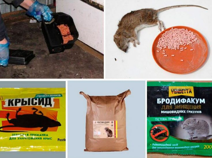 Как действует крысиный яд