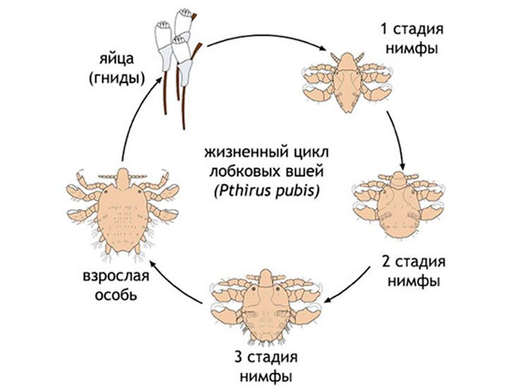 Процесс размножения