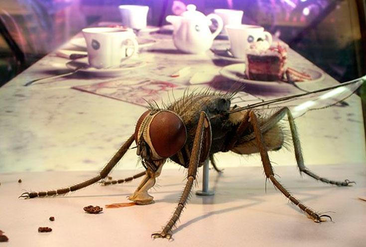 В чем опасность мух