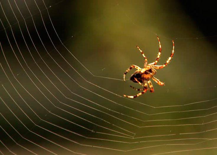Состав паутины
