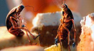Чего боятся тараканы в квартире - ТОП10